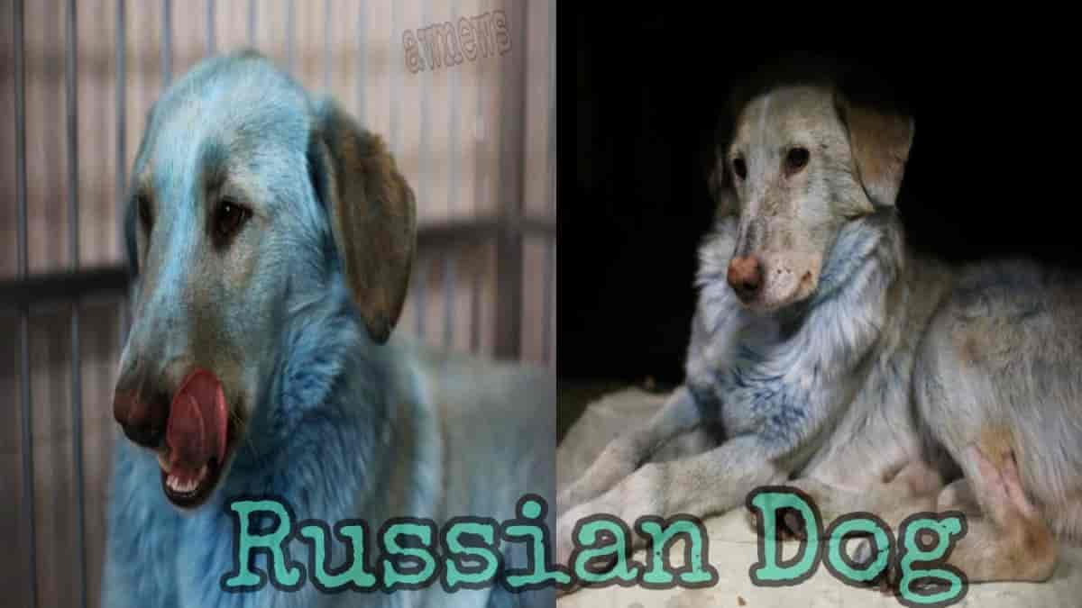 Russia Dogs get strange diseases in Russia, From Guess Chemical Factory